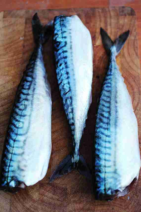 Mackerel1